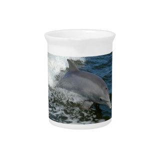 Wild Dolphin Pitcher
