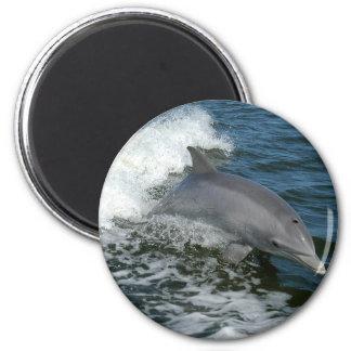 Wild Dolphin Round Magnet Fridge Magnet