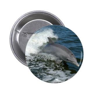Wild Dolphin Round Pin