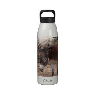Wild Donkeys Drinking Bottles