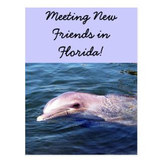 Wild Dophin Postcard