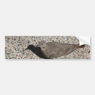 Wild Dove Bumper Sticker