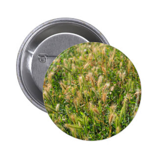 Wild dry plants in the meadow grass closeup pinback button