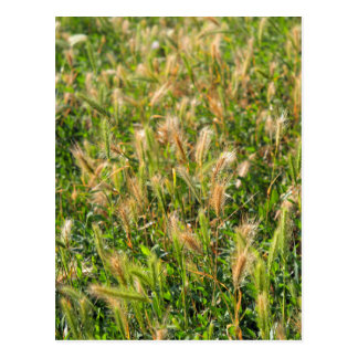 Wild dry plants in the meadow grass closeup postcard