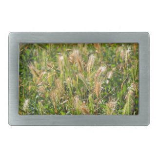 Wild dry plants in the meadow grass closeup rectangular belt buckle