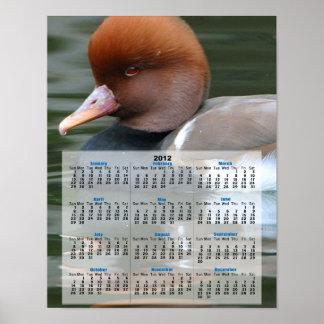 Wild duck 2013 calendar poster