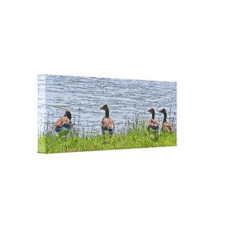 Wild duck canvas print