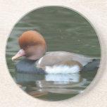 Wild Duck Coaster