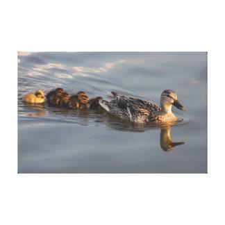 Wild duck family canvas print