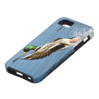 Wild Duck - iPhone 5 Cover