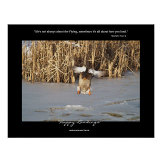 Wild Duck Landing on Icy pond Nature Poster