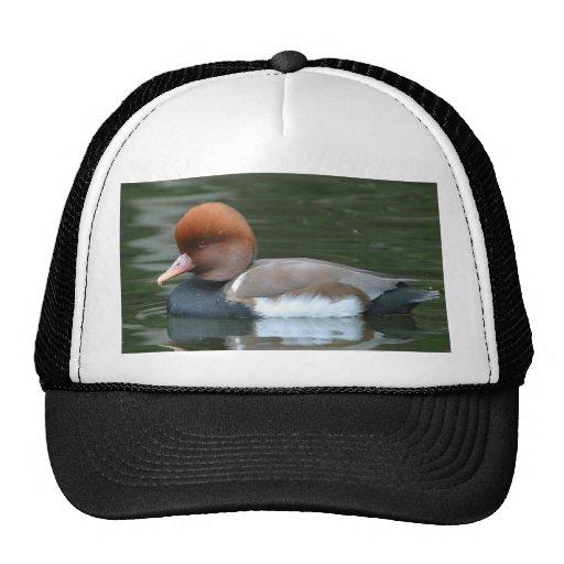 Wild Duck Mesh Hats