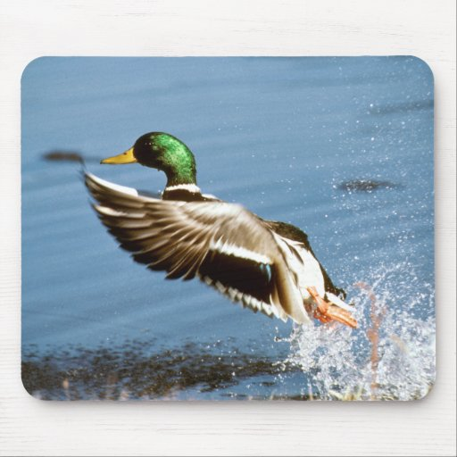 Wild Duck – Mouse Pad