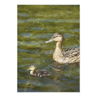 Wild duck with duckling card
