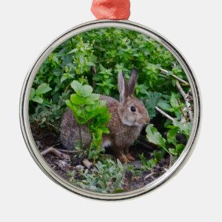 Wild English Rabbit Christmas Tree Ornament