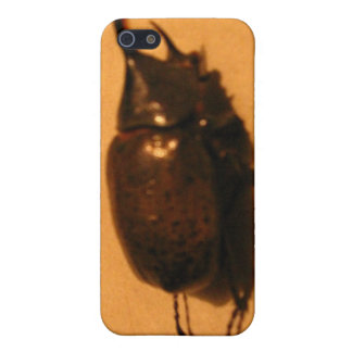 Wild Exotic Spiders, Beetles and Insects Covers For iPhone 5