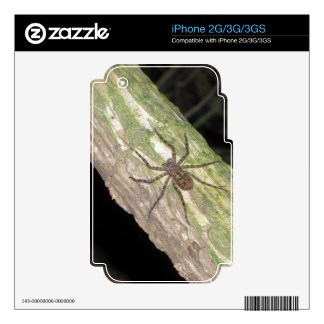 Wild Exotic Spiders, Beetles  and Insects iPhone 3 Decal
