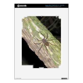 Wild Exotic Spiders, Beetles  and Insects iPad 3 Decal