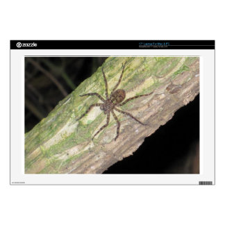 """Wild Exotic Spiders, Beetles  and Insects Skins For 17"""" Laptops"""