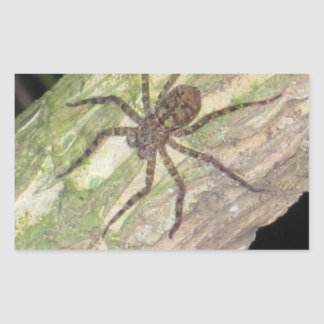 Wild Exotic Spiders, Beetles  and Insects Rectangular Stickers