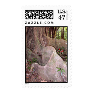 Wild Fig Tree Roots Postage Stamp