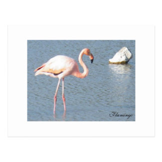Wild Flamingo Postcard