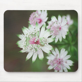Wild Flower Alps Mouse Pad
