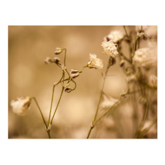 Wild Flower Closeup With Warm Sepia Tone Postcard