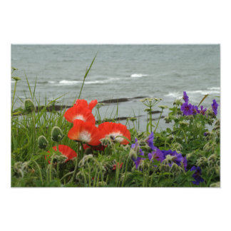 Wild Flower Coast Photo Print