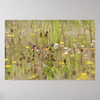 Wild flower fields poster