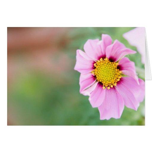 wild flower greeting card