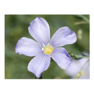 Wild Flower Postcard