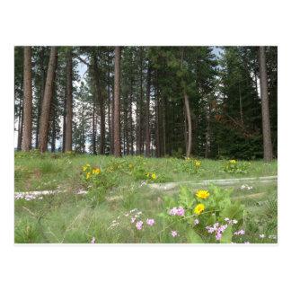 Wild Flower Woods Postcard