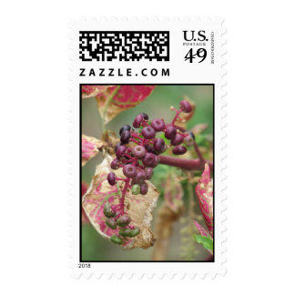 Wild Flowers Along the Schuylkill River Postage Stamps