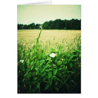 Wild flowers in wheat field - Germany Card