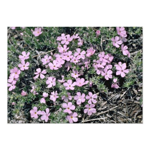 Wild flowers on Half Dome Trail Pink flowers 5x7 Paper Invitation Card