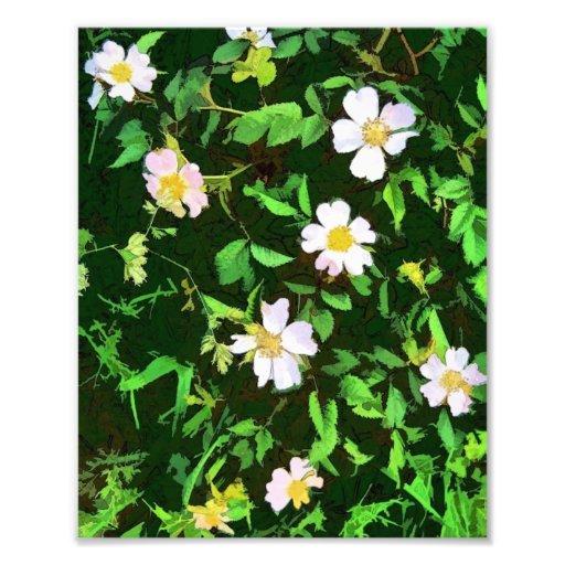 WILD FLOWERS PHOTO ART