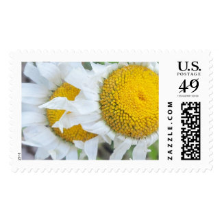 """""""wild flowers"""" stamps"""