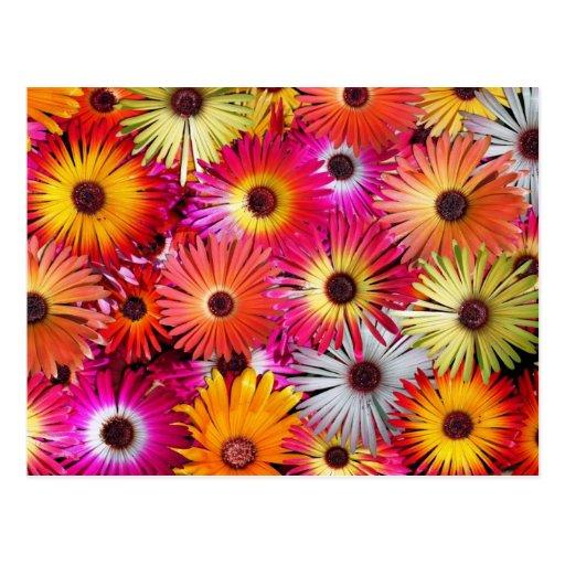 wild flowers post card