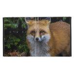 Wild Fox iPad Case