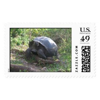 Wild Galapagos Tortoise Postage