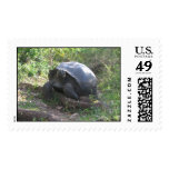 Wild Galapagos Tortoise Postage Stamp