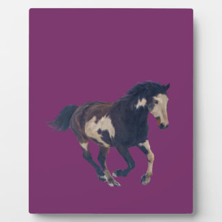 Wild Galloping Pinto American Paint Horse Photo Plaques