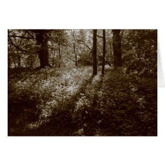 Wild Garlic in the Woods - Sepia Toned Card