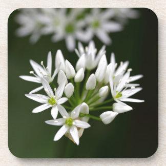 Wild garlic or ramsons Allium ursinum Beverage Coaster