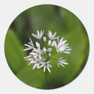 Wild garlic or ramsons Allium ursinum Classic Round Sticker