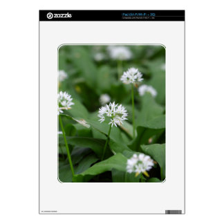 Wild garlic or ramsons Allium ursinum Decal For iPad