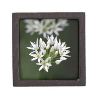 Wild garlic or ramsons Allium ursinum Jewelry Box