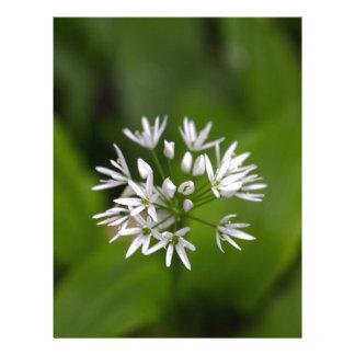 Wild garlic or ramsons Allium ursinum Letterhead