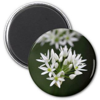 Wild garlic or ramsons Allium ursinum Magnet